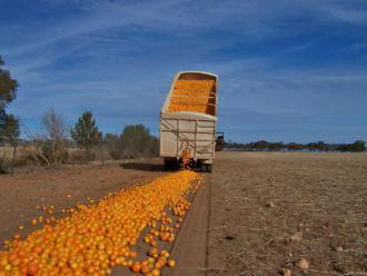 Domestically grown oranges are disposed of in Australia because they can't be sold at a profit (John Schilling)