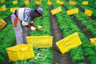 Farmworker in the fields of California (Newscom)