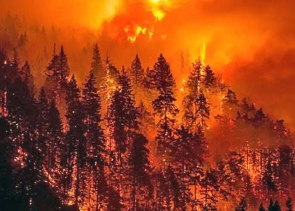 The forests of Oregon are ravaged by the Eagle Creek fire