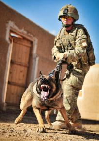 A US soldier training a military dog at a base in Helmand
