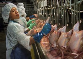 A poultry worker on the line at a Montgomery, Alabama, plant