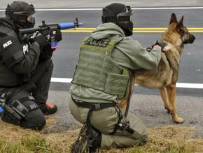 Police operating with a K9 unit
